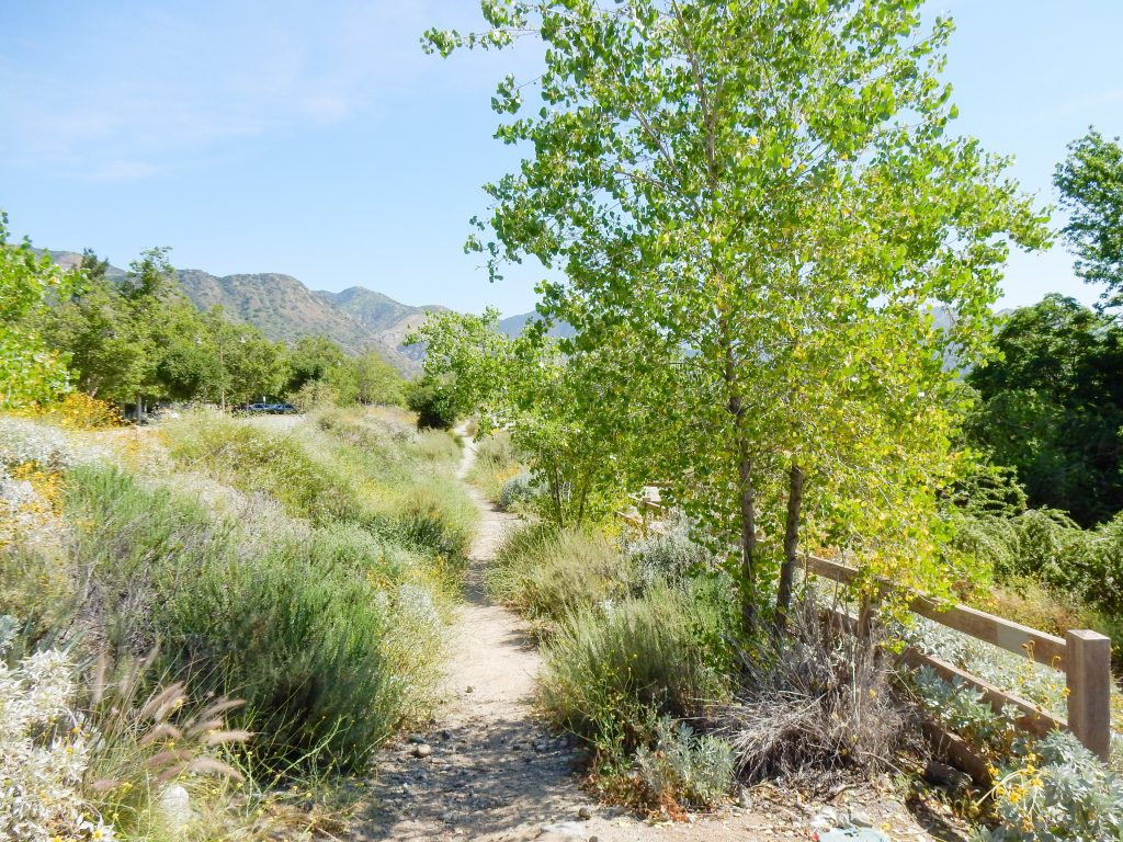 Image of Encanto Park Nature Walk trail with a tree