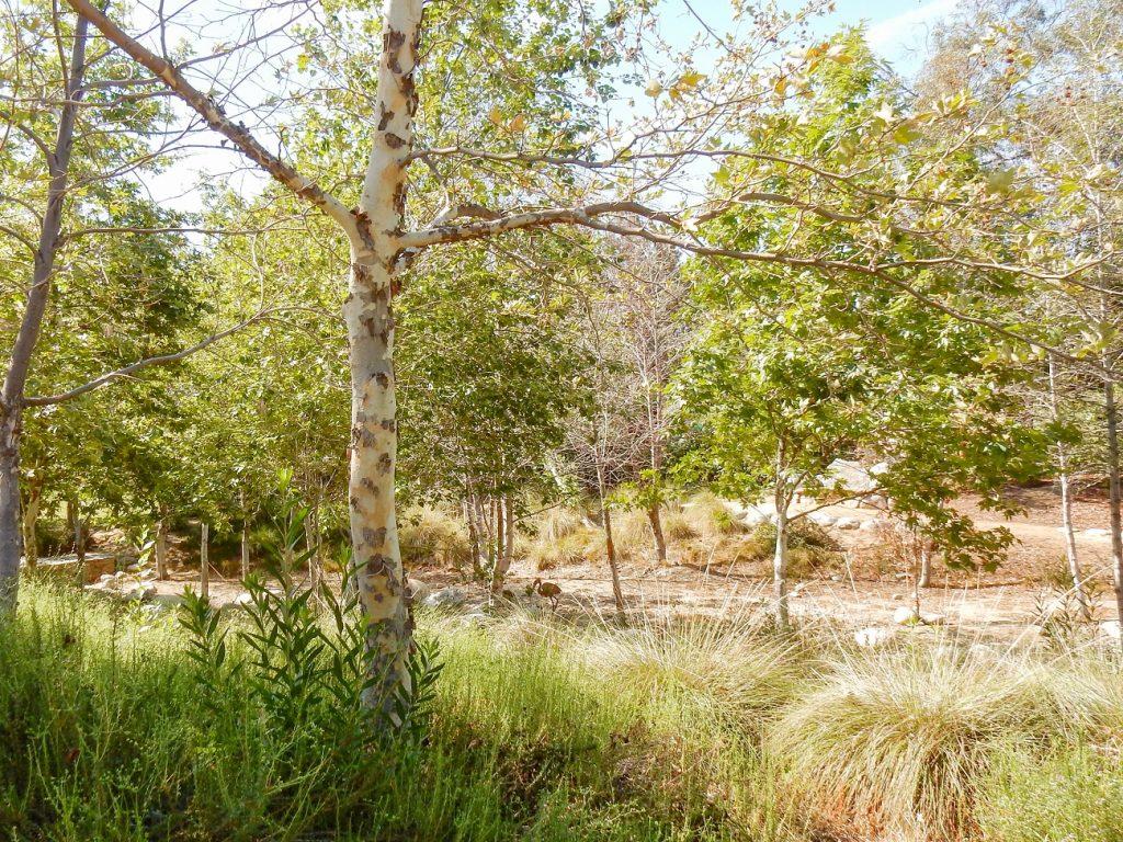 Image of Encanto Park Nature Walk