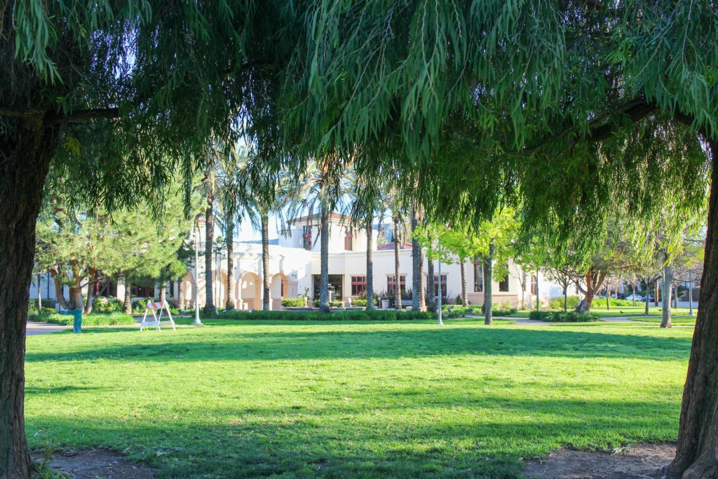 Image from under a tree at Glendale Central Park